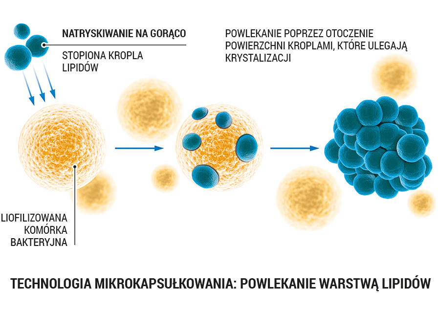 https://media.lab1.com/uploads/probiotyk_kapsulki_pl.jpg